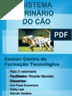 seminario de veterinaria Sistema Urinário