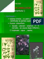 botanica veterinara  curs X
