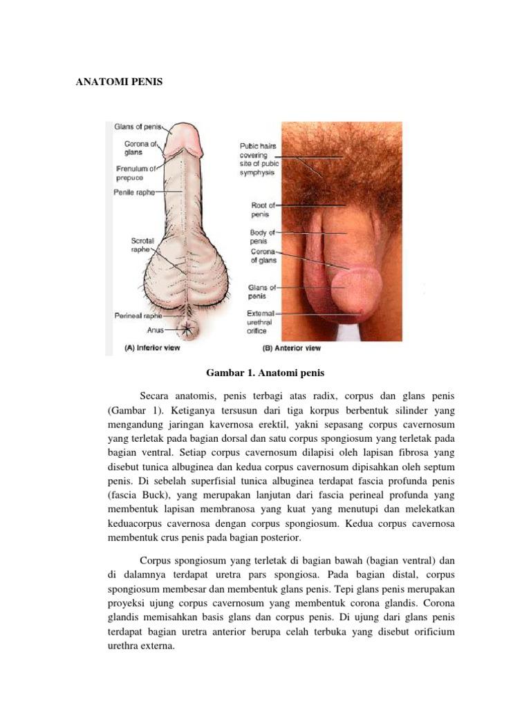 util pentru penis