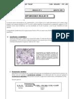 5to. Año - BIOLOGÍA - Guía 6 - Metabolismo Celular II