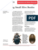 identification and management of the small hive beetle