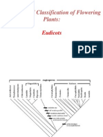 eudicots.ppt