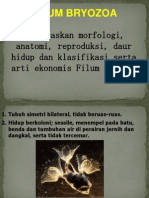 (7) Bryozoa
