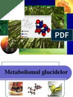 Metabolismul Glucidelor New