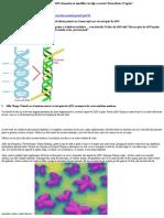 12 Spirale de ADN