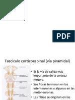 Corteza motora primaria y núcleo rojo