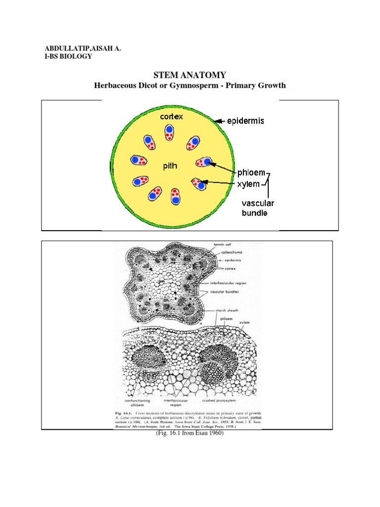 Gym No Sperm | Plant Stem | Tissue (Biology)