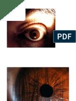 Exploring Human Eye