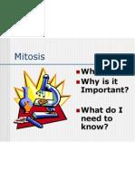 mitosis-2