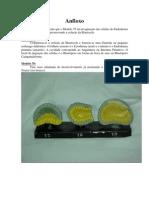 Modelos de Embriologia 2 Prova