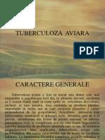 TUBERCULOZA  AVIARA