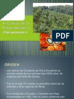 El Cultivo de La Palma Aceitera