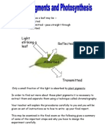 Plant Pigments