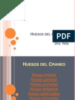 Huesos Del Craneo. Frontal[1]