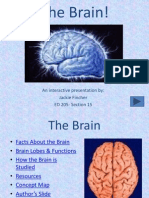 Project the Brain