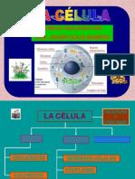 celula-solis-100111165854-phpapp01
