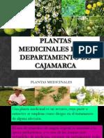 Plantas Medicinales en El Departamento de Cajamarca