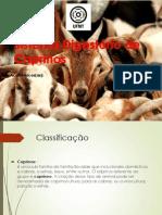 CAPRINOS Completo Arrumado