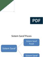 Sistem Saraf Vertebrata Hotim