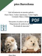 Puppies Bcn