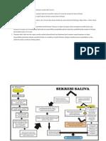 Proses Pembentukan Dan Sekresi Saliva Pada Dasarnya Terjadi Oleh 2 Proses