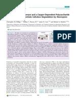 Cellobiose Dehydrogenase and a Copper-Dependent Polysaccharide Monooxigenase Potentiate Cellulose Degradation by Neurospora Crassa