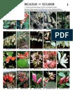 Ericaceas de Ecuador