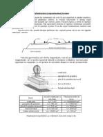 Caracteristicile Sistemului Feroviar Roata Sina