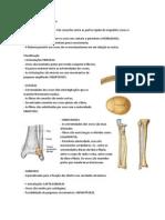 Anatomia Articulações