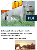 Brucelose Animal