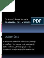 Anatomia Del Craneo