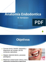 Anatomia Endodontica