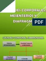 Cavidades Corporales, Mesenterios y Diafragma