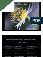 Honey Bee Races