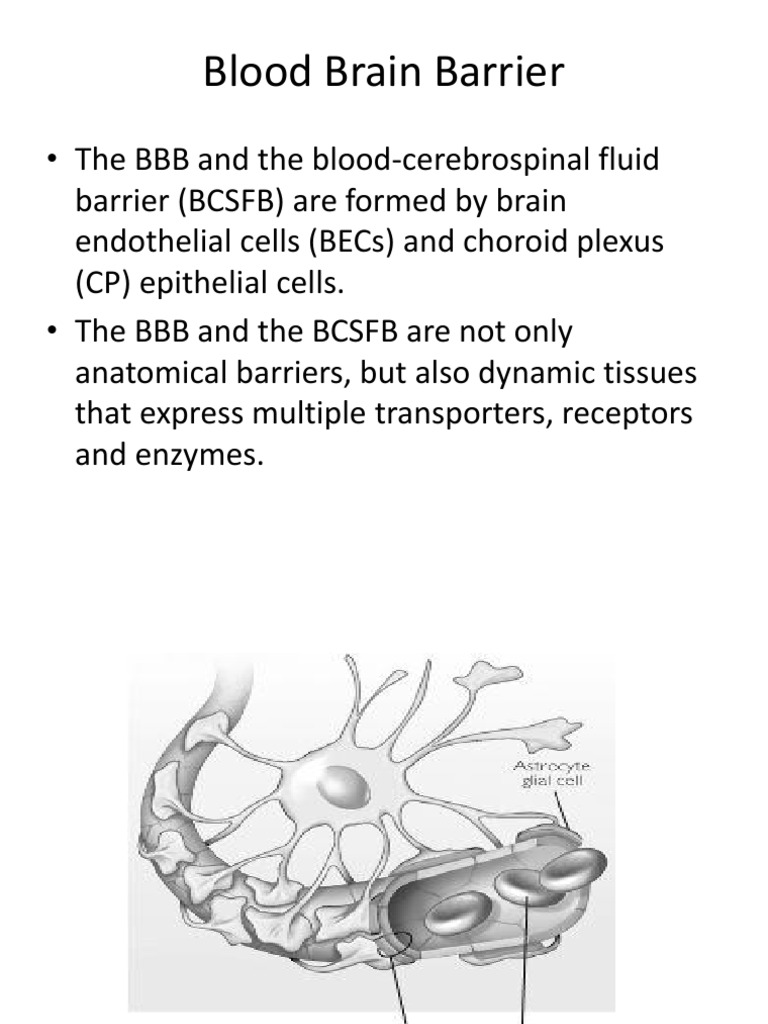 K - 8 Blood Brain Barrier (Biokimia).ppt | Macromolecules | Proteins