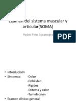 3era- Semana -Sesion 1 Examen Del Sistema Muscular y Articular 11-03-2013