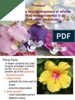 Flowers PDF