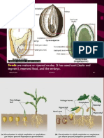 Fruit and Seed Dispersal PDF