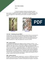 Casos de Patentes de Fauna e Flora Brasileira