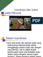 Sistem Koordinasi Dan Indra Pada Manusia Copy