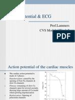 Action Potential ECG
