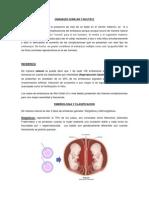 Embarazo Gemelar y Multiple Fisiologia