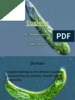 Euglena Bio
