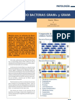 Bacterias Gram Positivas Gram Negativas