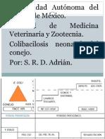 Colibacilosis Neonatal Del Conejo