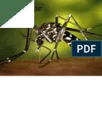 dengue-110330092300-phpapp02