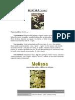 Nomes Cientificos Das Ervas Folclore