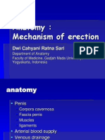 Presentasi-mechanism of Erection 2013