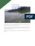 Ribuan Ikan Mati Cemari Sungai Martapura