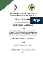 TESIS CACAO en Vivero Con Dos Injertos